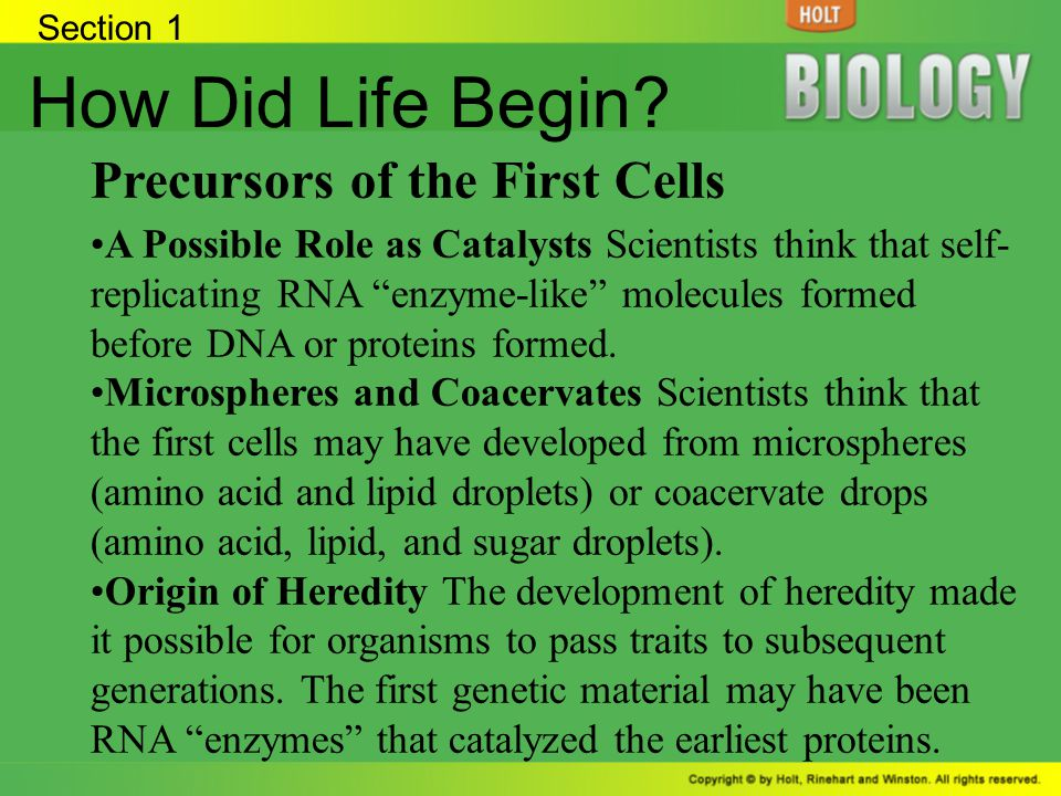How Did Life Begin Precursors of the First Cells