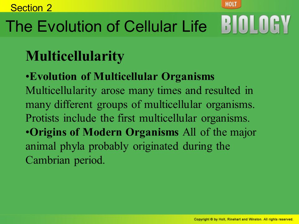 The Evolution of Cellular Life