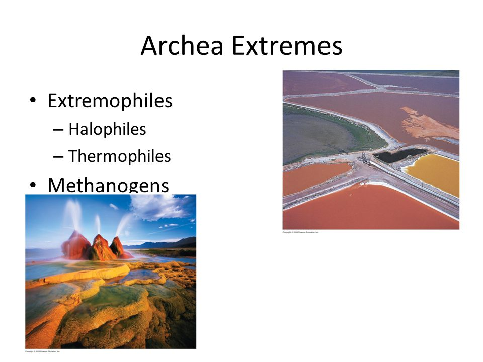Archea Extremes Extremophiles Halophiles Thermophiles Methanogens