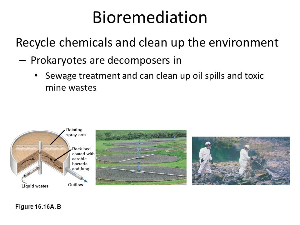 Bioremediation Recycle chemicals and clean up the environment