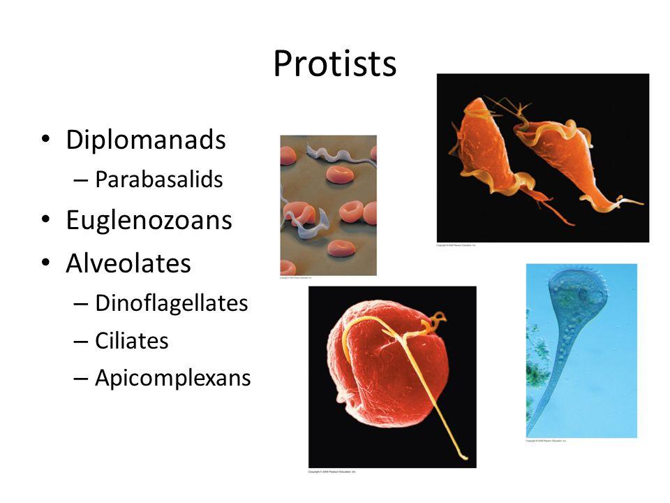 Protists Diplomanads Euglenozoans Alveolates Parabasalids