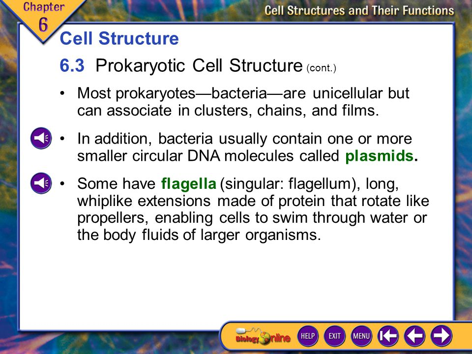 6.3 Prokaryotic Cell Structure 2