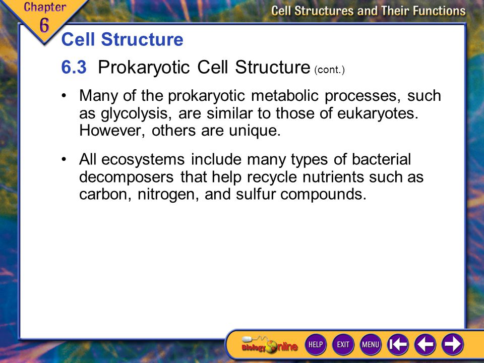 6.3 Prokaryotic Cell Structure 5