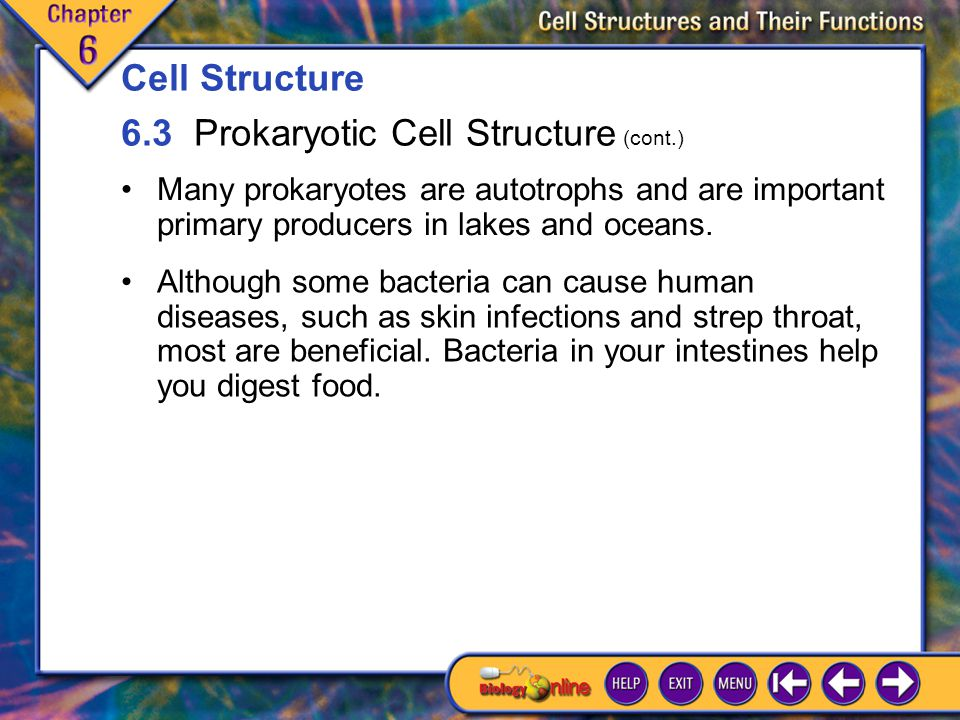 6.3 Prokaryotic Cell Structure 6