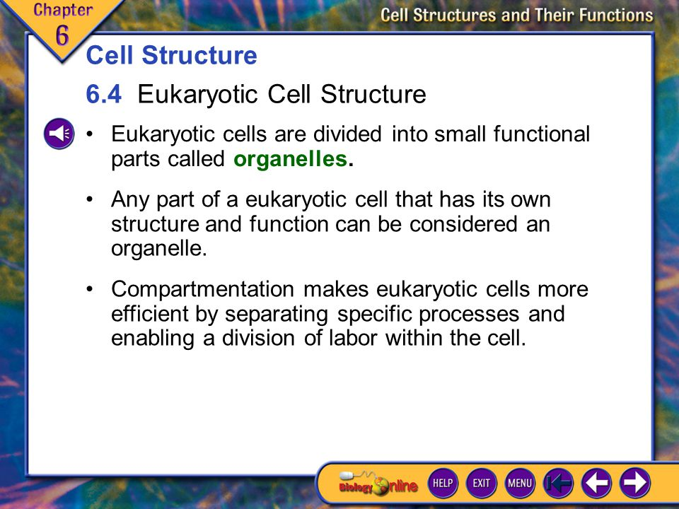 6.4 Eukaryotic Cell Structure 1