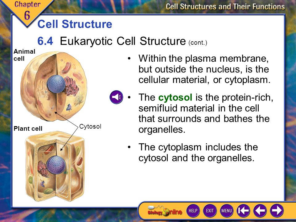 6.4 Eukaryotic Cell Structure 5