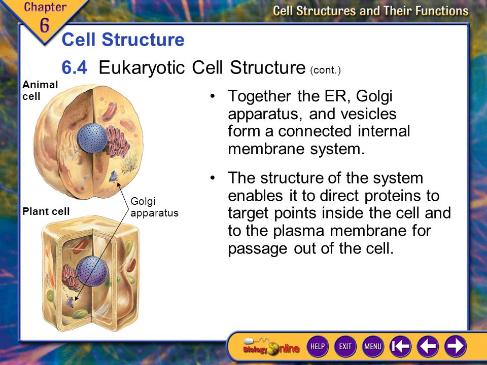 6.4 Eukaryotic Cell Structure 10