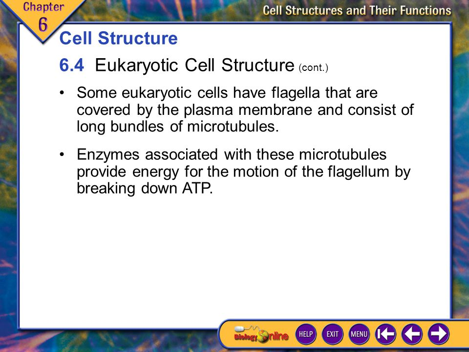 6.4 Eukaryotic Cell Structure 16