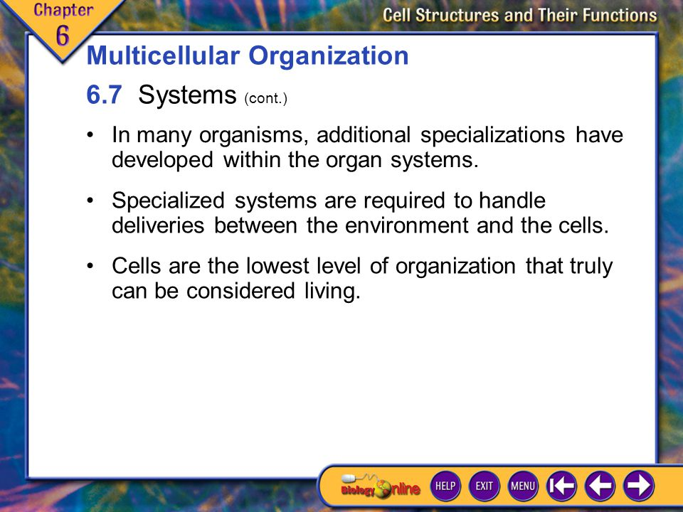 Multicellular Organization 6.7 Systems (cont.)