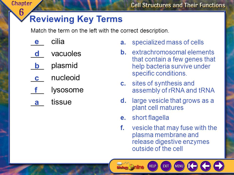 Reviewing Key Terms ___ cilia ___ vacuoles e d ___ plasmid b