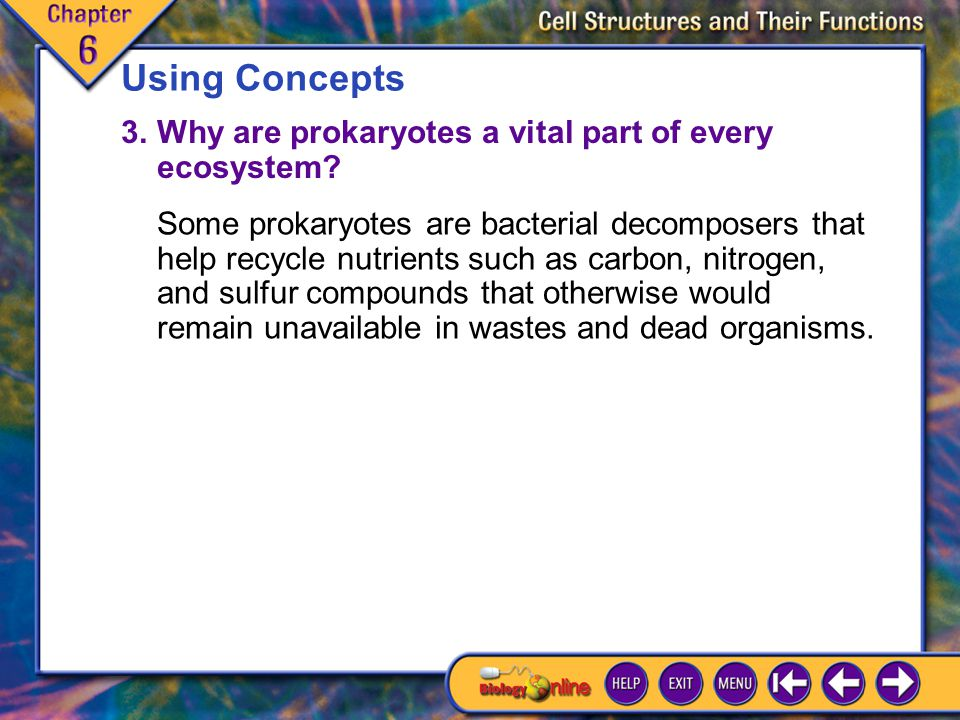 Using Concepts 3. Why are prokaryotes a vital part of every ecosystem