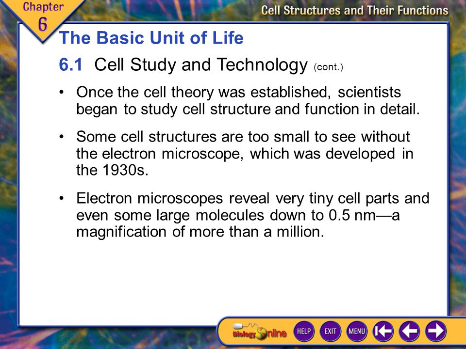 6.1 Cell Study and Technology 3