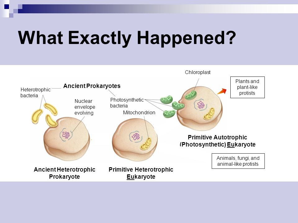 What Exactly Happened Ancient Prokaryotes