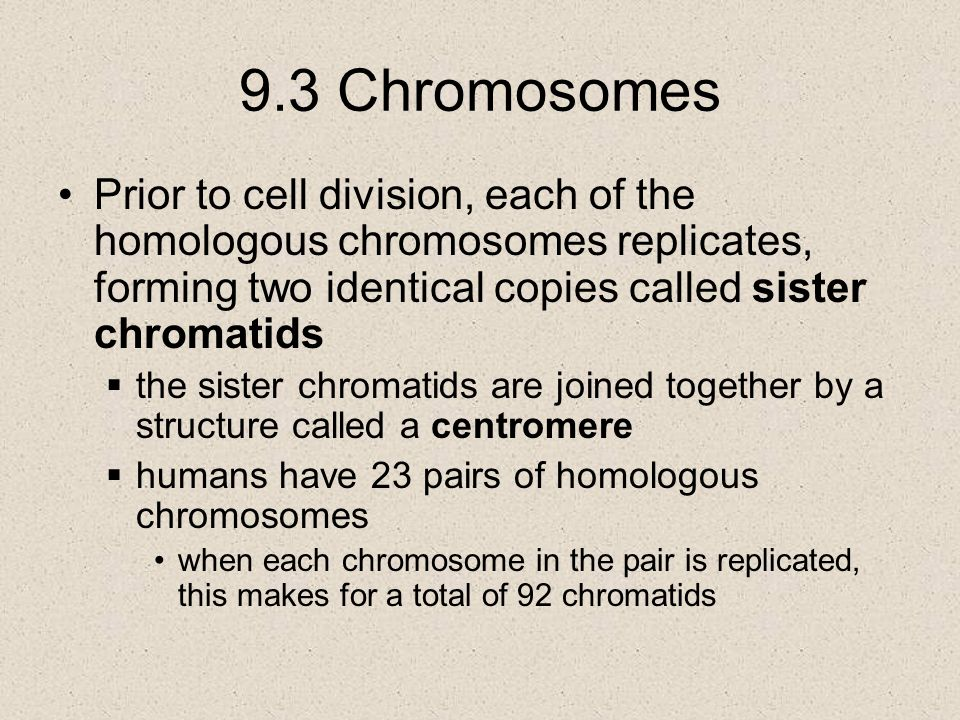 9.3 Chromosomes Prior to cell division, each of the homologous chromosomes replicates, forming two identical copies called sister chromatids.