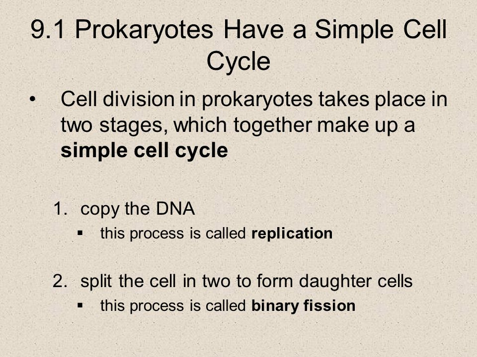9.1 Prokaryotes Have a Simple Cell Cycle