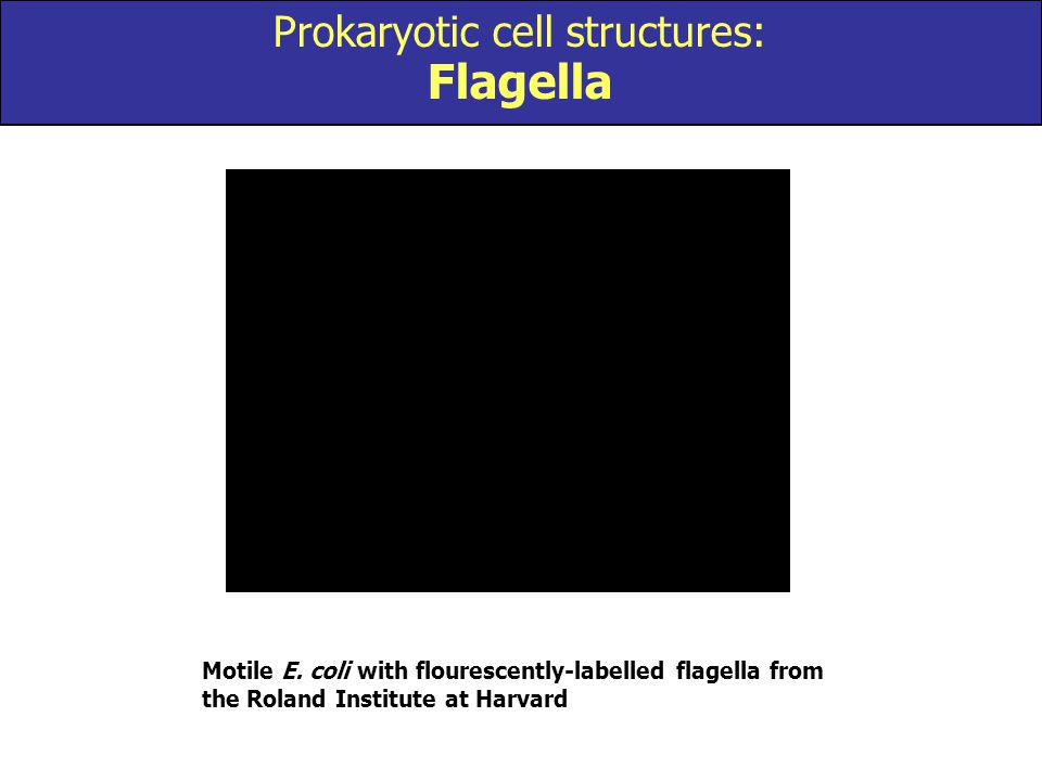 Prokaryotic cell structures: Flagella