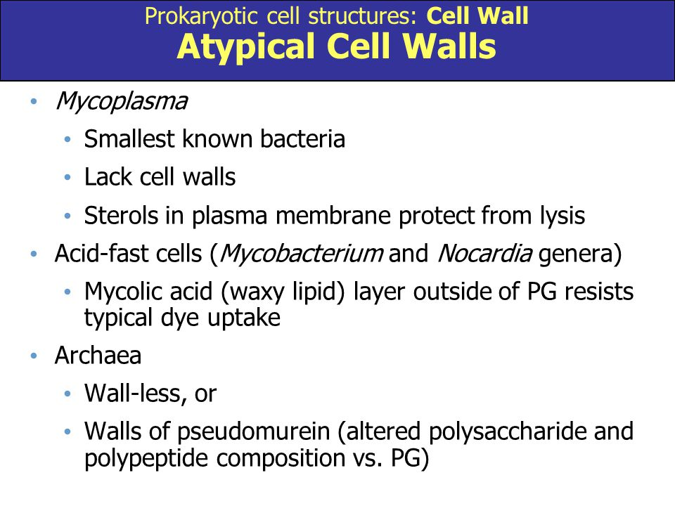 Prokaryotic cell structures: Cell Wall Atypical Cell Walls