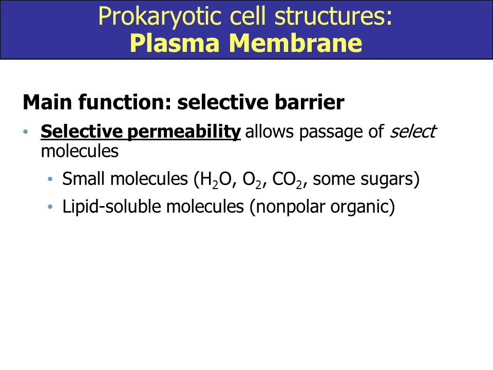 Prokaryotic cell structures: Plasma Membrane