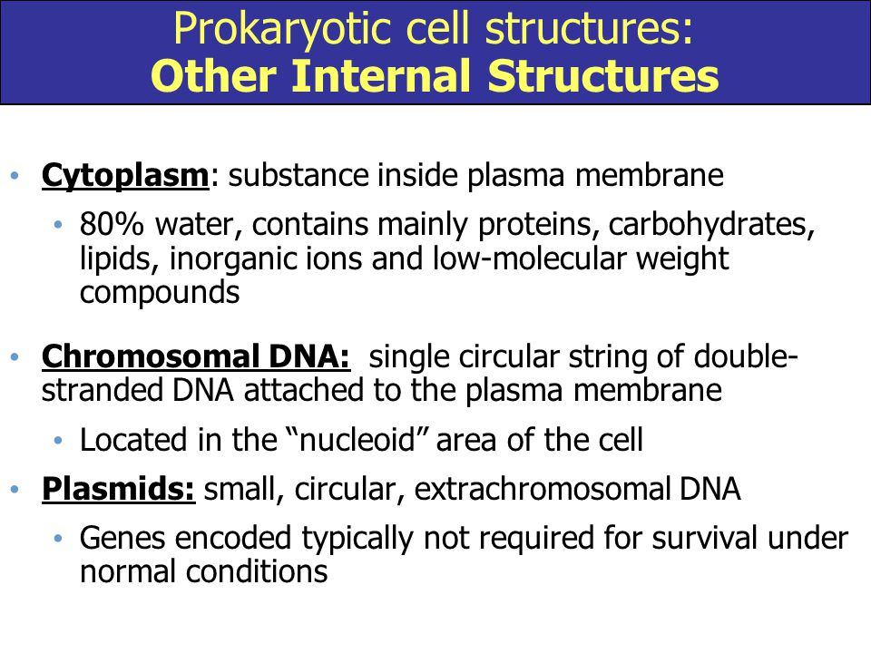 Prokaryotic cell structures: Other Internal Structures