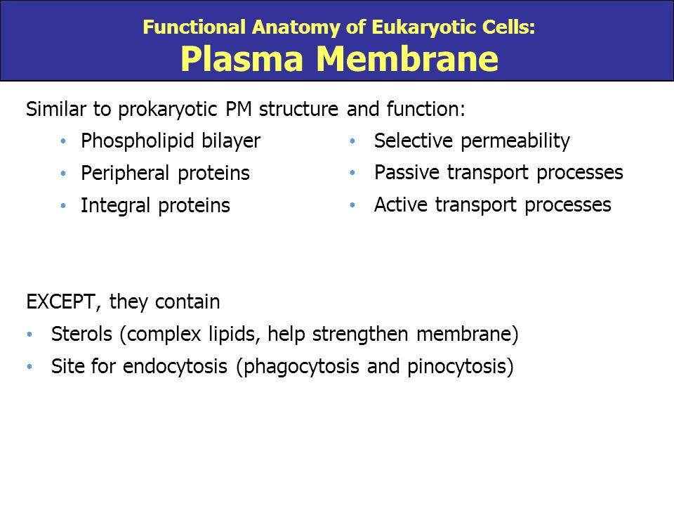 Functional Anatomy of Eukaryotic Cells: Plasma Membrane