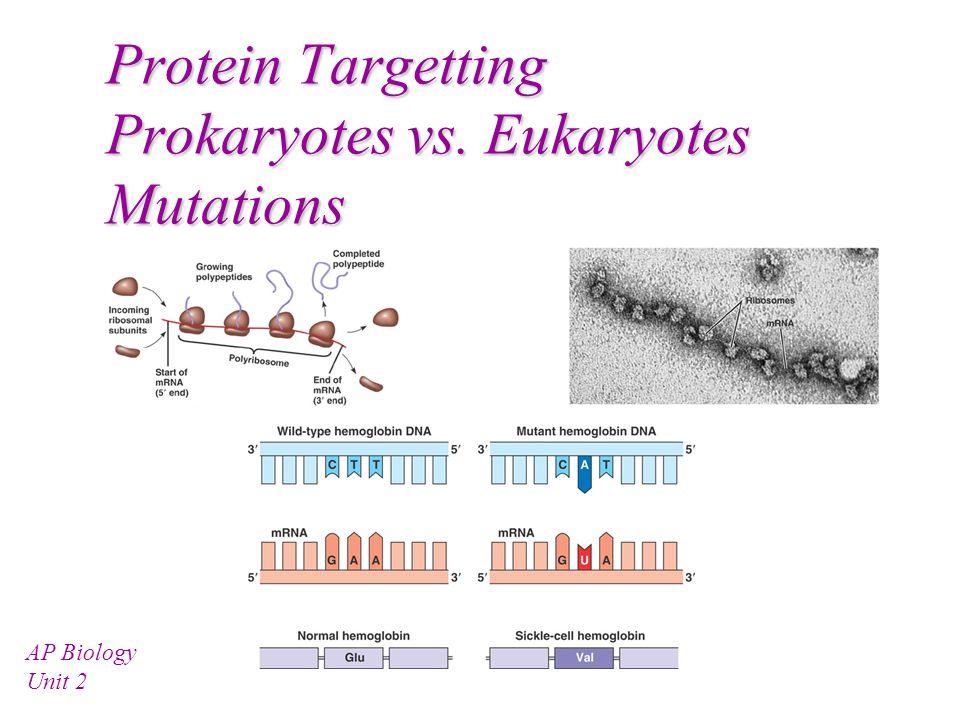 Protein Targetting Prokaryotes vs. Eukaryotes Mutations