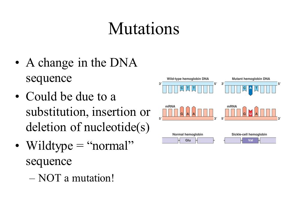 Mutations A change in the DNA sequence