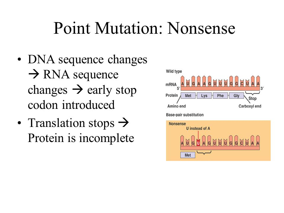 Point Mutation: Nonsense