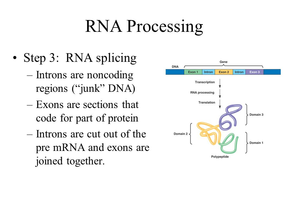 RNA Processing Step 3: RNA splicing