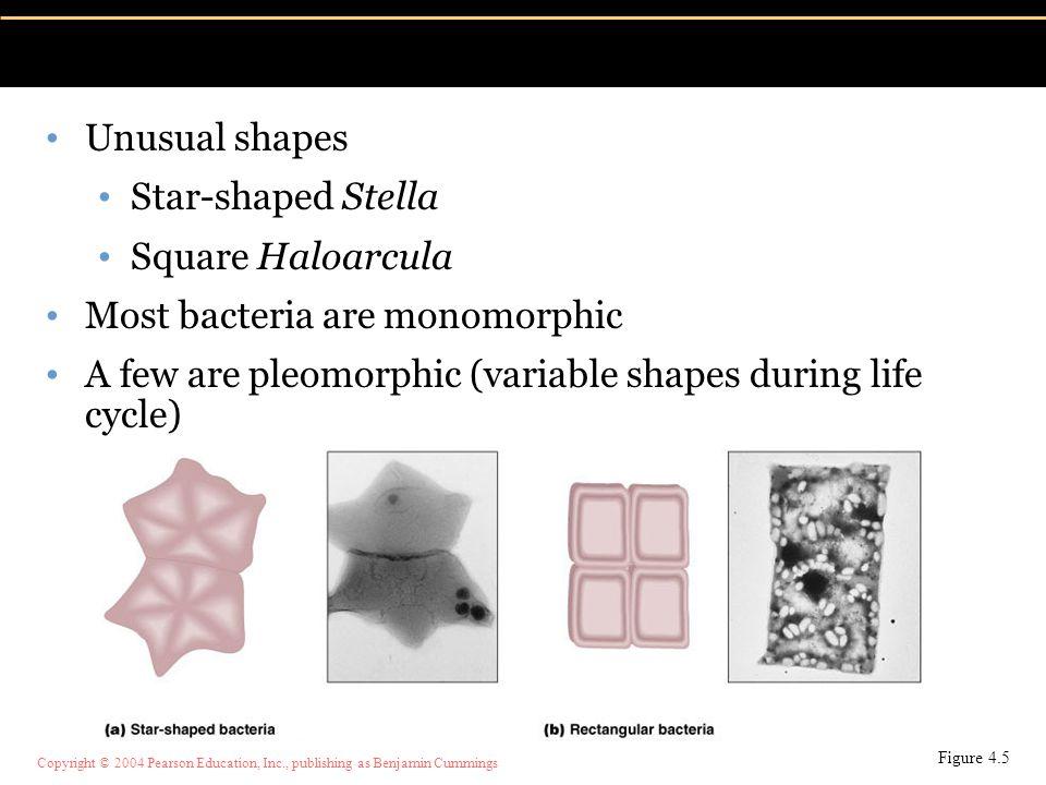 Most bacteria are monomorphic