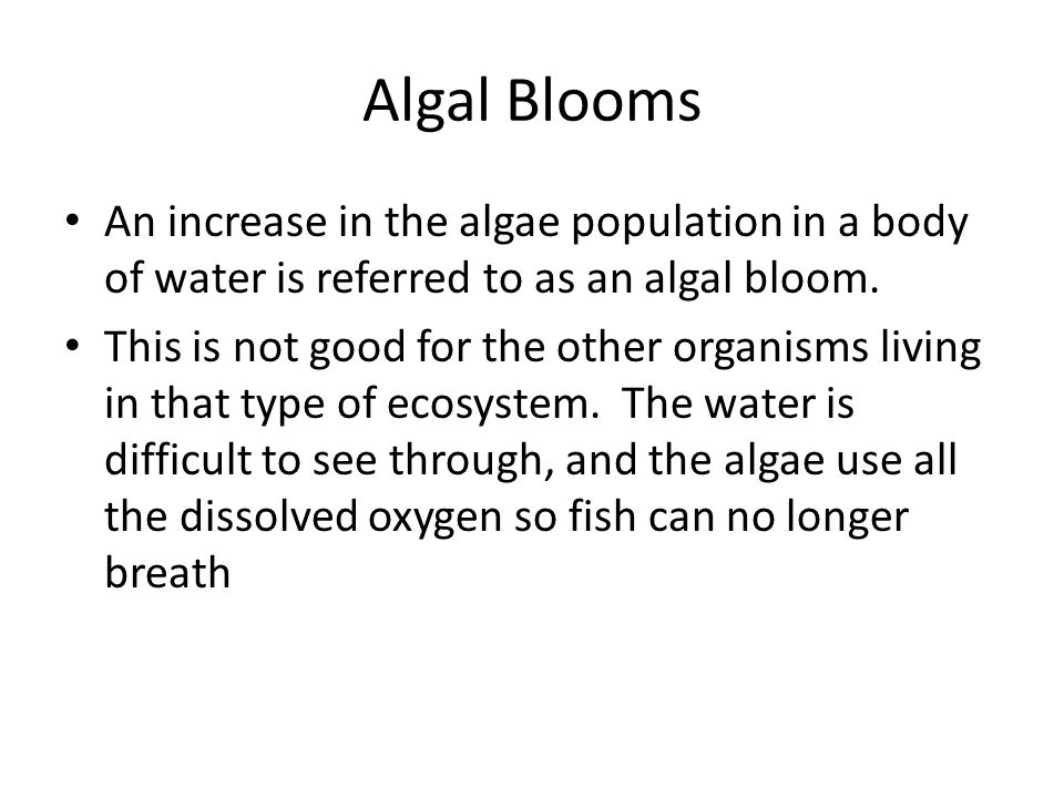 Algal Blooms An increase in the algae population in a body of water is referred to as an algal bloom.