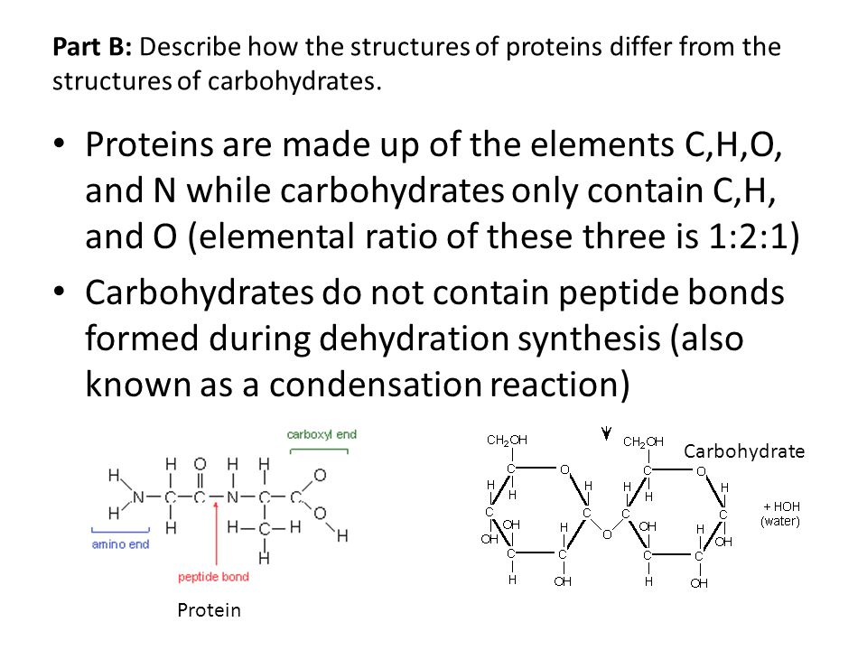 Part B: Describe how the structures of proteins differ from the structures of carbohydrates.