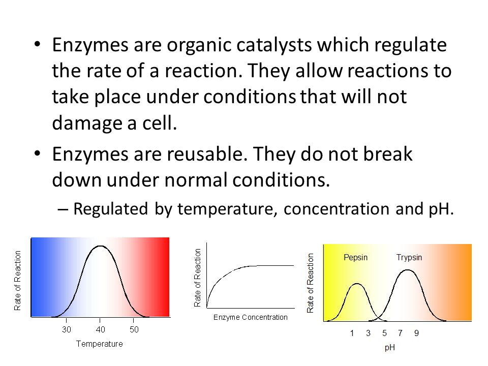 Enzymes are reusable. They do not break down under normal conditions.