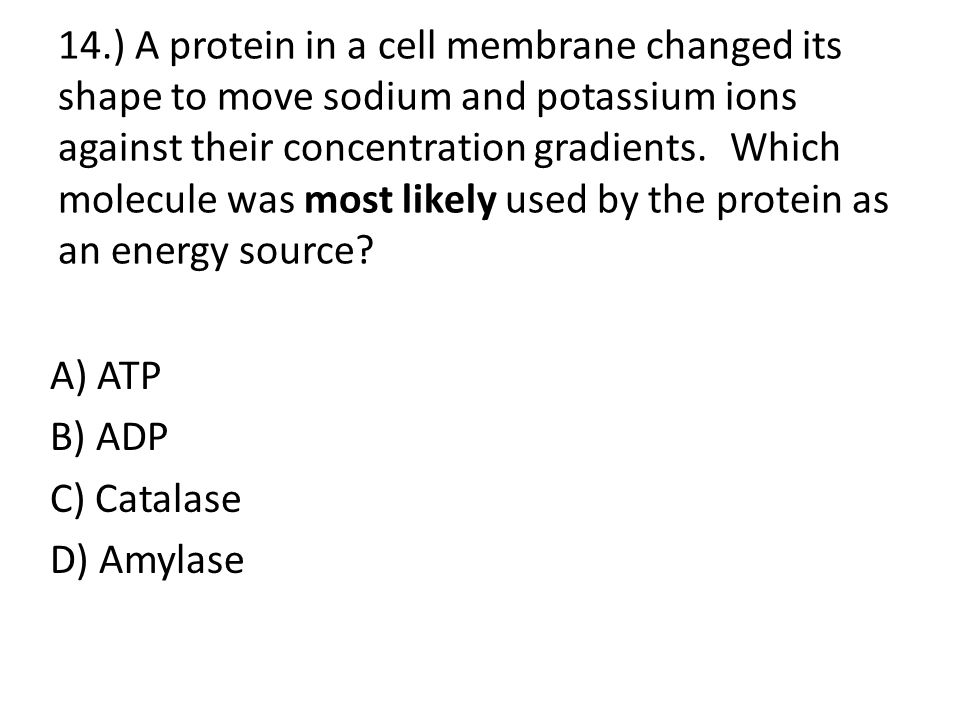 14.) A protein in a cell membrane changed its shape to move sodium and potassium ions against their concentration gradients. Which molecule was most likely used by the protein as an energy source