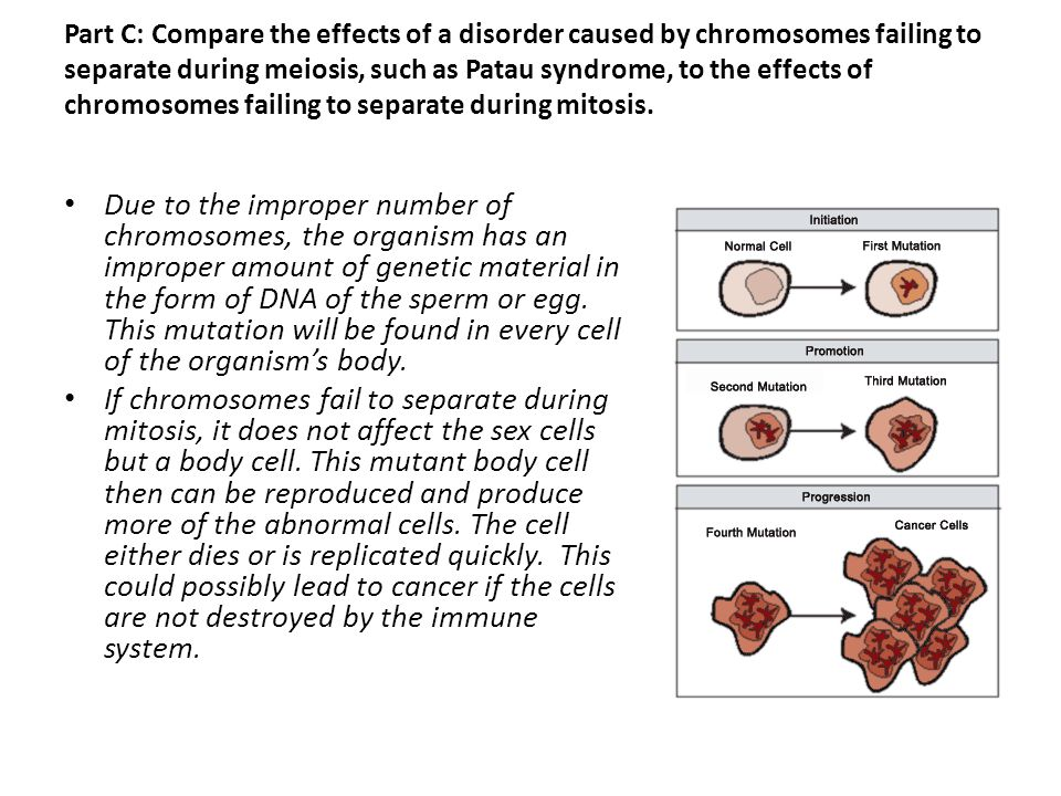 Part C: Compare the effects of a disorder caused by chromosomes failing to separate during meiosis, such as Patau syndrome, to the effects of chromosomes failing to separate during mitosis.
