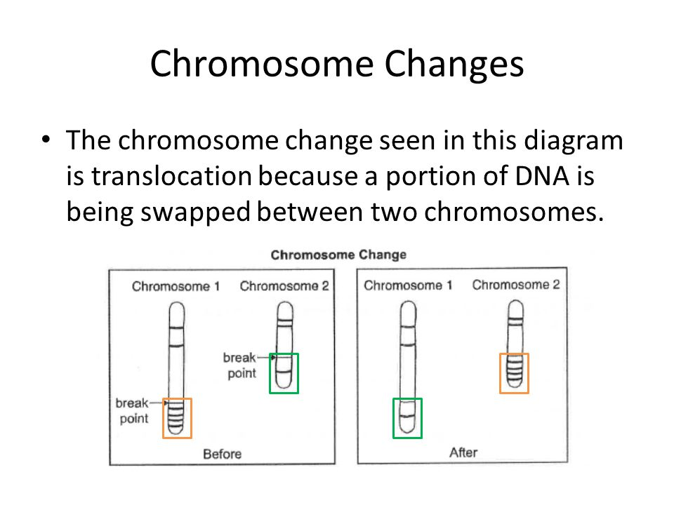 Chromosome Changes The chromosome change seen in this diagram is translocation because a portion of DNA is being swapped between two chromosomes.
