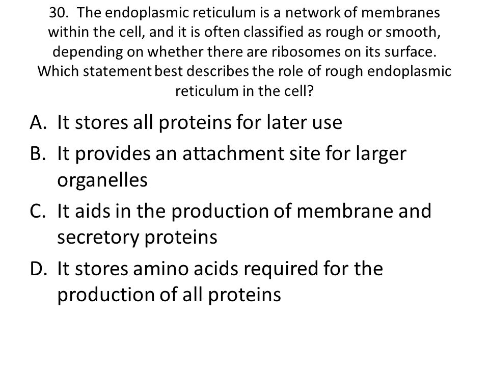 It stores all proteins for later use