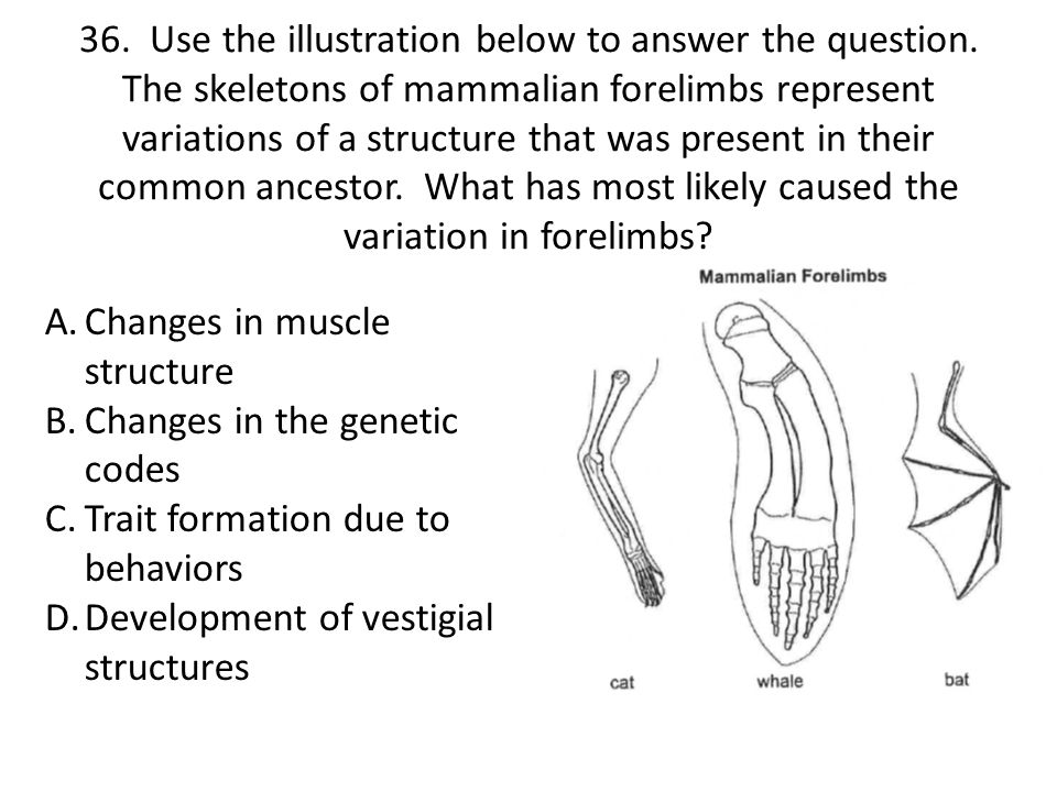 36. Use the illustration below to answer the question