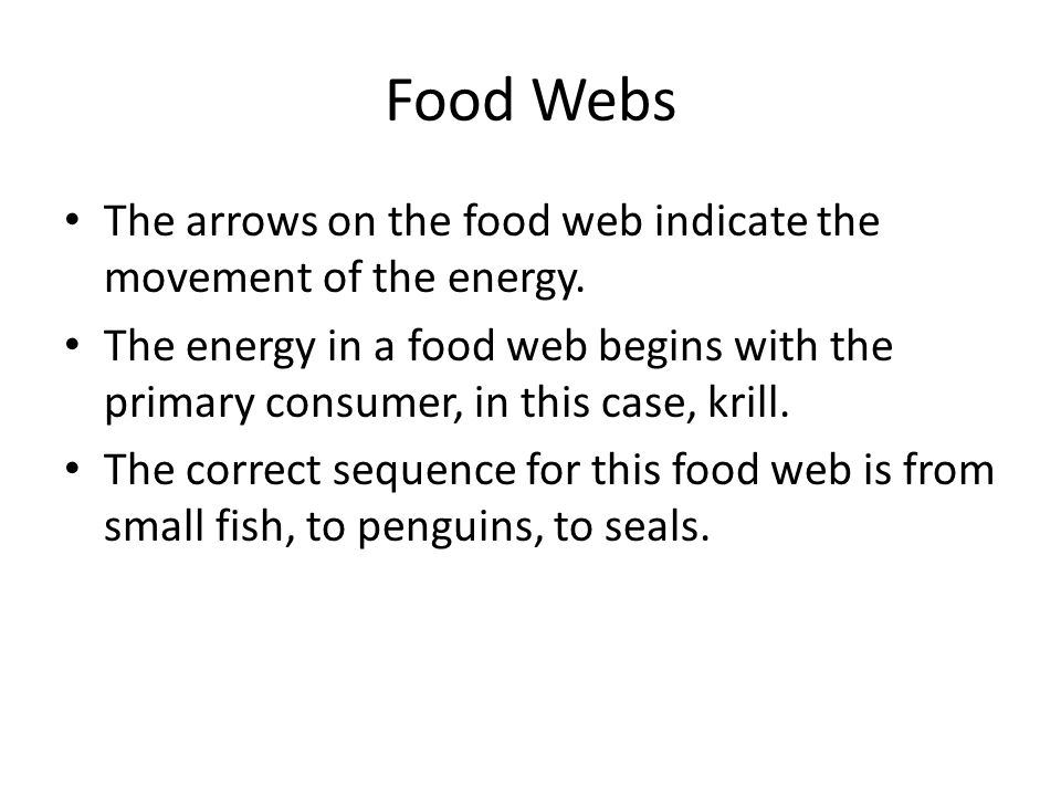 Food Webs The arrows on the food web indicate the movement of the energy.