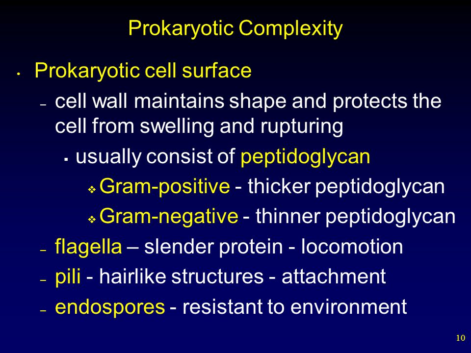 Prokaryotic Complexity