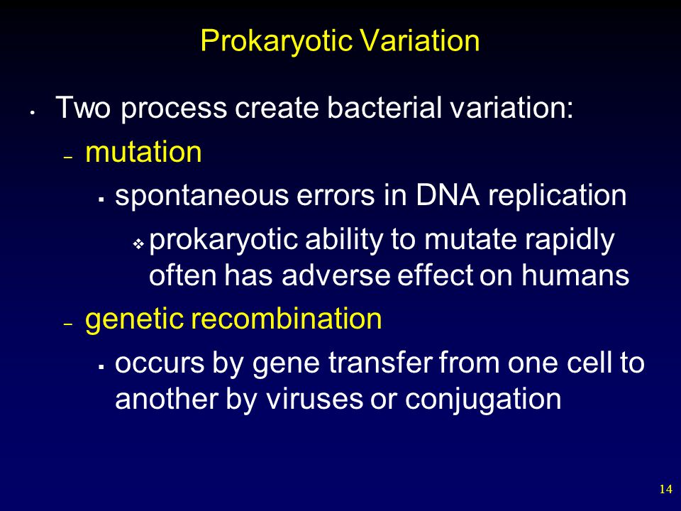 Prokaryotic Variation
