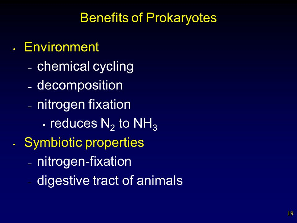 Benefits of Prokaryotes