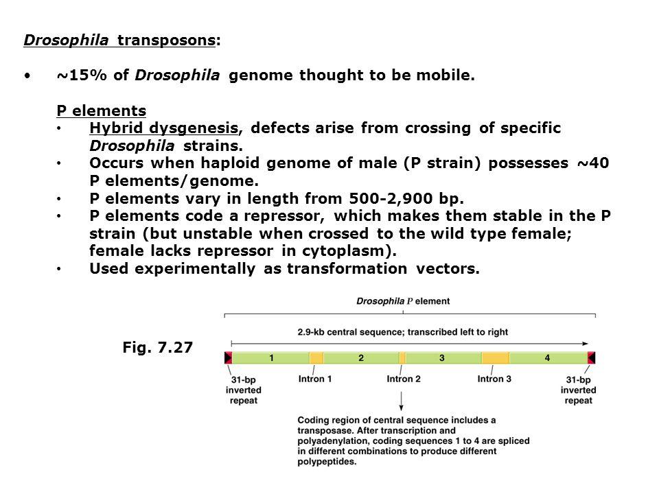 Drosophila transposons: