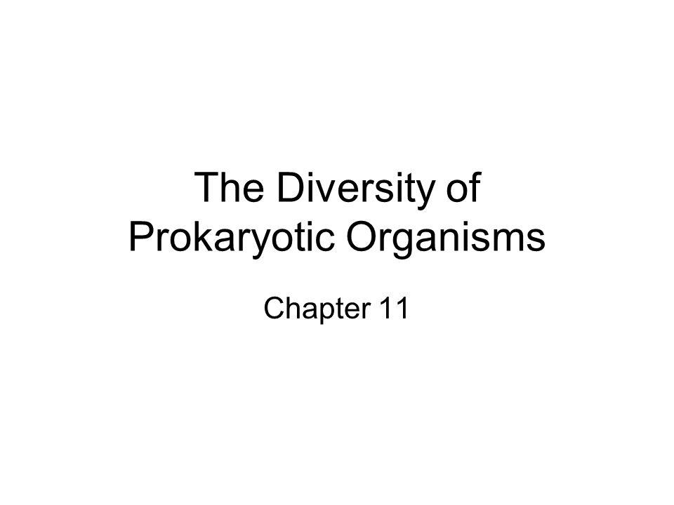 The Diversity of Prokaryotic Organisms