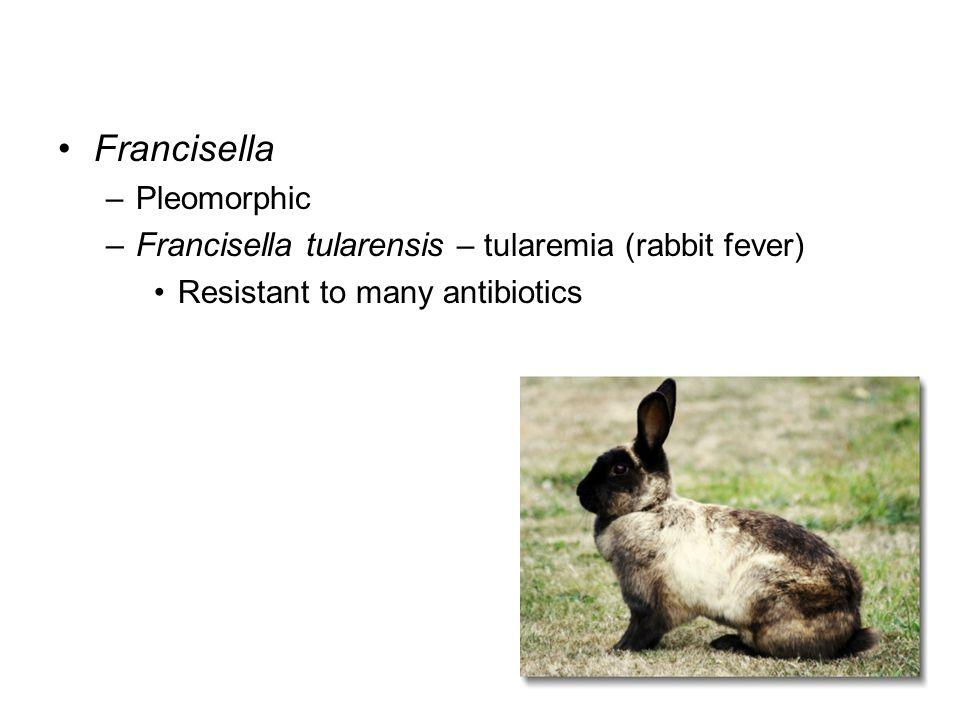 Francisella Francisella tularensis – tularemia (rabbit fever)