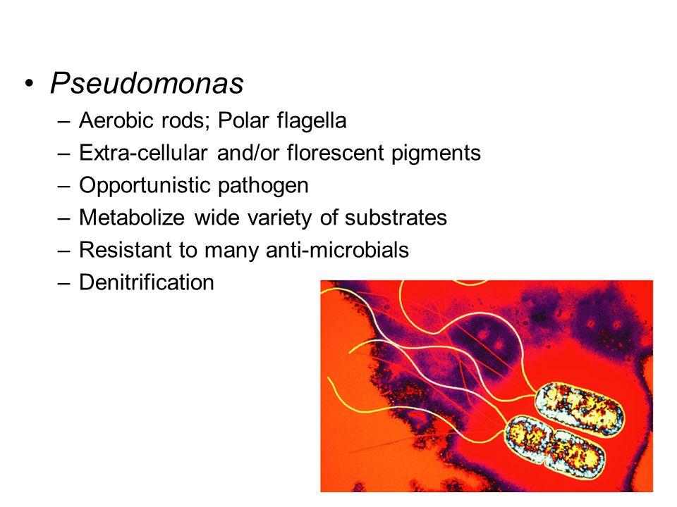 Pseudomonas Aerobic rods; Polar flagella
