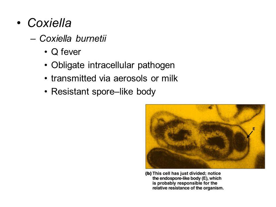 Coxiella Coxiella burnetii Q fever Obligate intracellular pathogen
