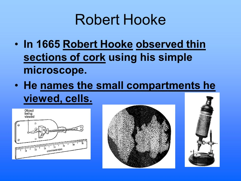 Robert Hooke In 1665 Robert Hooke observed thin sections of cork using his simple microscope.