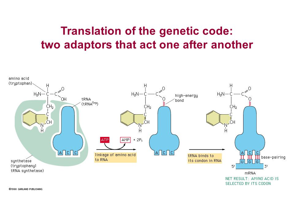 Translation of the genetic code: