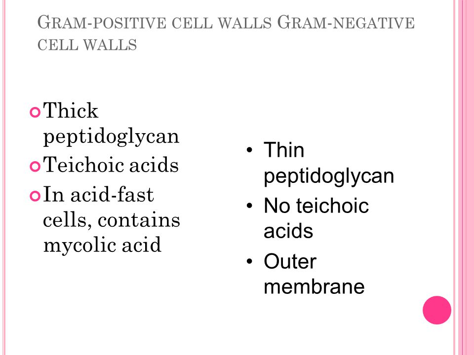 Gram-positive cell walls Gram-negative cell walls