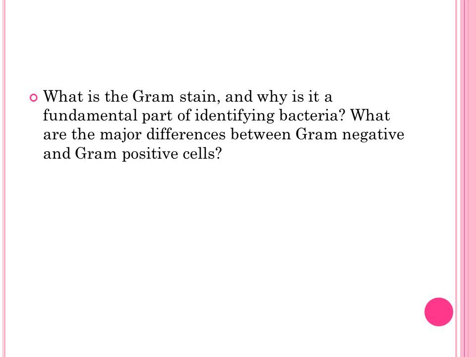 What is the Gram stain, and why is it a fundamental part of identifying bacteria.